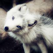 动物高清图片特写
